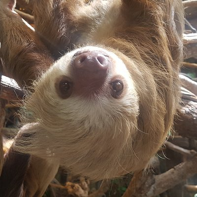 Sloths spotted by our clients on the way to la Fortuna
