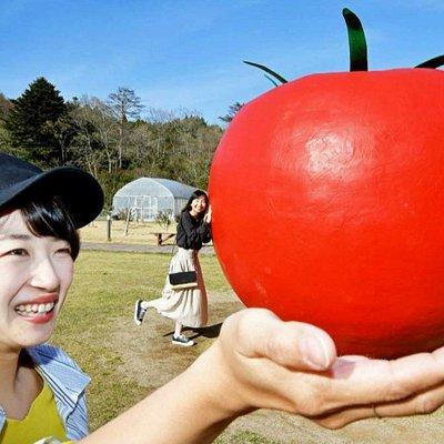 ワンダーファームのアイコン 『日本最大のトマト』です。