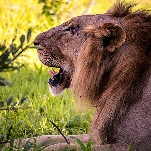 His Majesty. King of the Saba Pride