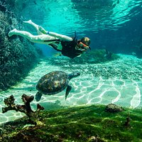 Snorkelling in Turtle Lagoon.