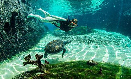 Snorkelling in Turtle Lagoon.