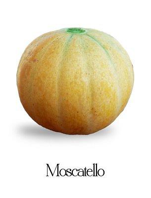 """Questo è il famoso """"Melone dei Gonzaga""""  Varietà di melone perduta e poi ritrovata e recuperata coltivata insieme a molte altre in azienda. E' possibile vedere ed assaggiare questo melone  facendo visita all'azienda durante il mese di giugno periodo nel quale si coltiva per il recupero del seme."""