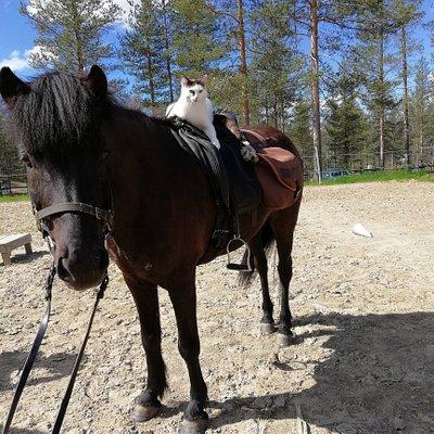 Täplä, the riding cat