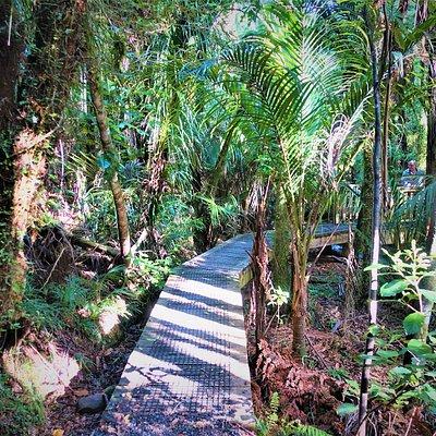 Waiau Kauri Grove