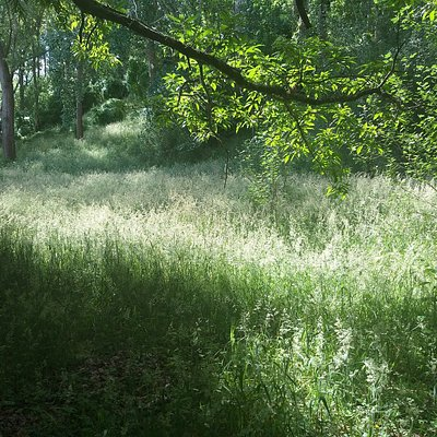 views of meadows in dappled light