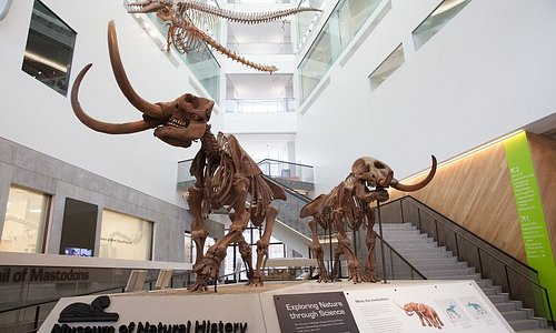 Male and female mastodons greet visitors