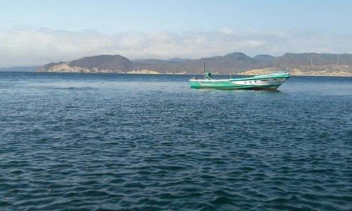 Percebe junto a helecho marino.. aguas cristalinas... vistas espectaculares.... piquero de patas azules ... bote para los Tours 😎👌🐬🐟🐠🐡🐙🏝🛥