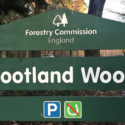 1.  Footland Wood, Robertsbridge, East Sussex