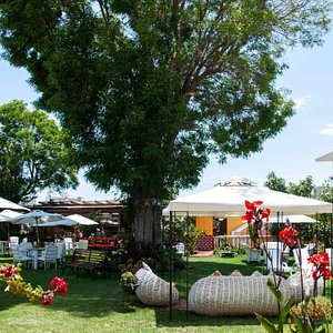 A view of our garden. An excellent space to relax and chill after tours. Sunchairs, umbrellas, and tables available