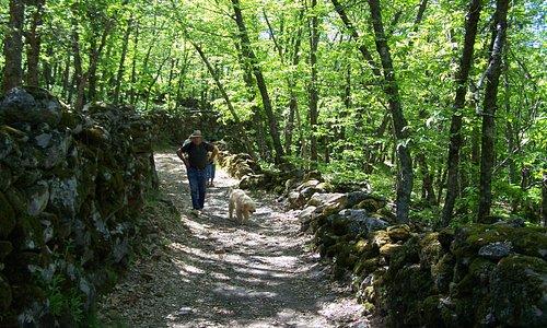 Traumhafte Kastanienwälder und antike Granitsteinmauern bieten ideale Wanderwege, man glaubt kaum, dass man in Spanien ist.