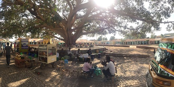 People gather under a beautiful tree in a town roundabout to socialize and take a breather.