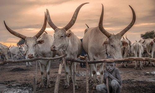 Мальчик из племени Мундари из Южного Судана. Люди из этого племени живут вместе со своими коровами, которые дают им все необходимое для жизни.