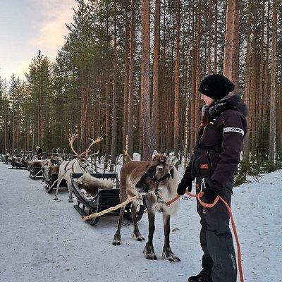 Johanna and the main reindeer.