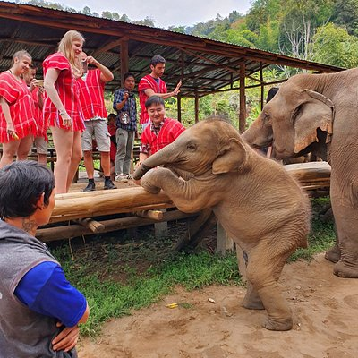 Baby elephant from Bamboo elephant family care your welcomes