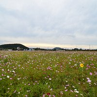 field of flowers in front of Flowersome Pizza