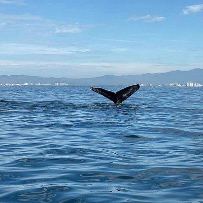 whale watching in Puerto Vallarta - Dream come true