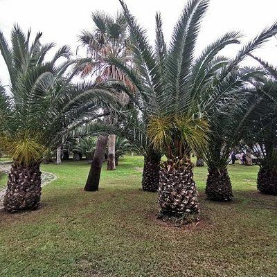 Palmeral de Melilla