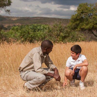 Safari companions