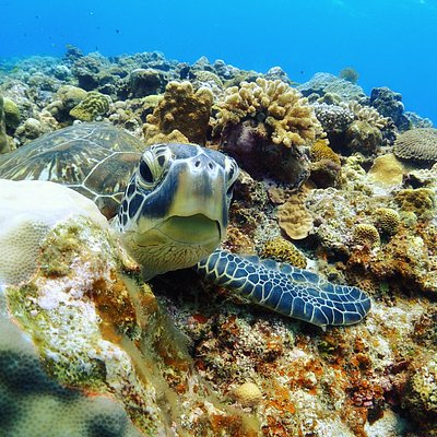half asleep Sea turtle