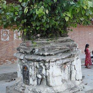 Itum Bahal (cortile), un chaitya (piccolo stupa) con un albero della bodhi di fronte al Kichandra Bahal