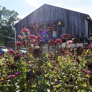 view of the sales barn from the flower field