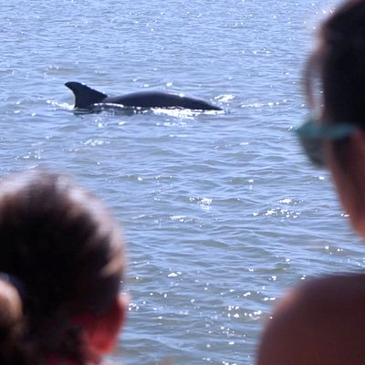 We see dolphins on all 3 of our tours, Dolphin, Sunset and Mermaid Tours