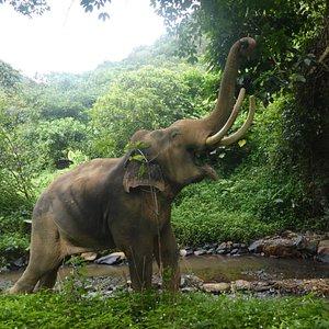 Letting Elephants Lead The Way