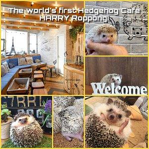 当店は世界初のハリネズミカフェです