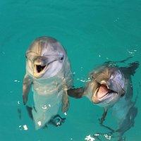 Свободное плавание дельфинами понравится каждому!