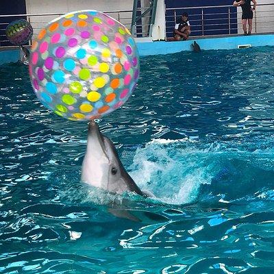 Наши гости получают возможность наблюдать дельфинов в непосредственной близости.   «Лазаревский» - самый новый дельфинарий в Лазаревском (г. Сочи). Он расположен в специально построенном здании с глубоководными бассейнами и высококлассным техническим оснащением.