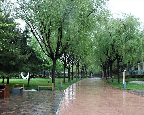 Walkway through the park