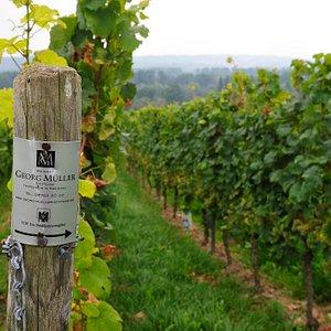The estate covers an area of approximately 19 hectares with excellent vineyard locations such as Nussbrunnen, Wisselbrunnen, Hassel, Schützenhaus, Engelmannsberg or Jungfer.