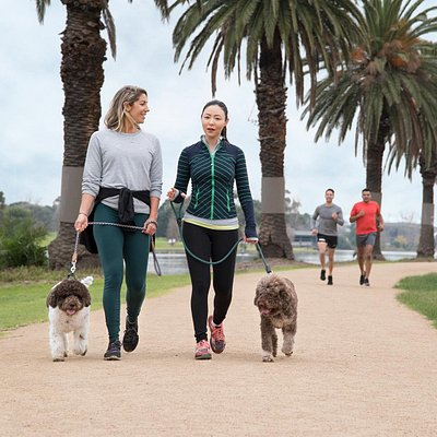 Jog, cycle or walk with your dog around Albert Park Lake