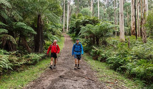 Walking in Dandenong Ranges National Park