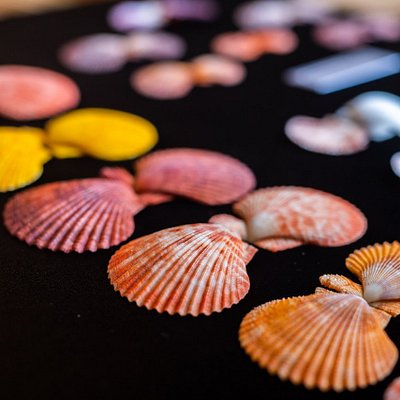 The collection of seashells extends to more than 8000 pieces.