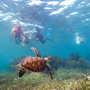Early morning snorkeling at Puerto Morelos is the best!