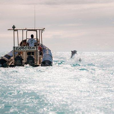 observation des dauphins le long de la côte ouest de la Réunion tous les jours