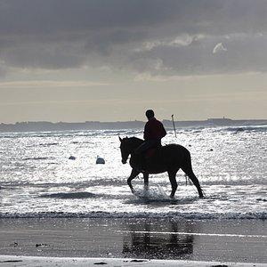 Plage du Loc'h  le cavalier sur la plage