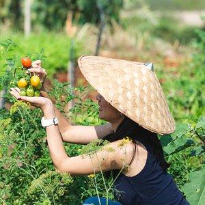 Eco-Farm Tour