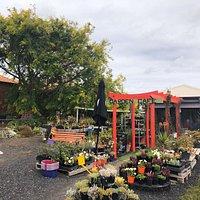Koroit Succulents & Natives Garden Cafe