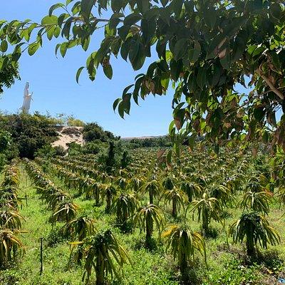Blick vom Bassin zum Ladybuddah über Drachenfruchtplantage