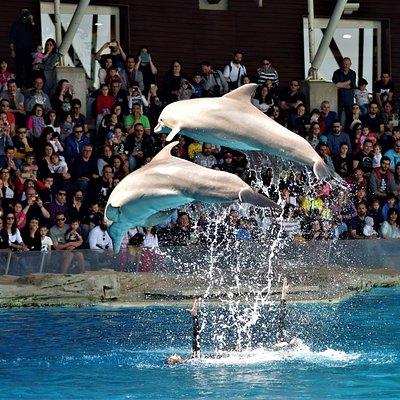 Delfini in Laguna