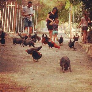 Visitas para todos los públicos. La mayor exposición de animales domésticos, autóctonos, de las islas canarias.