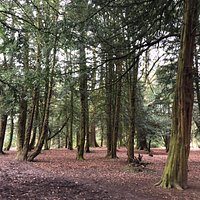 Lovely walk around Alfreton Park this week. Under the trees it's nice and sheltered but there are large open spaces too plus a children's play area for all ages.