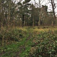 12.  Orlestone Forest Nature Reserve, Warehorne, Kent