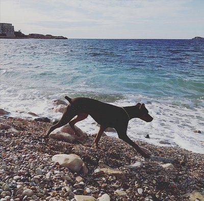 Bandol Dog Beach