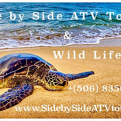 Side by Side ATV Tours & WILD LIFE