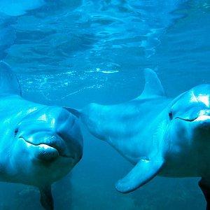 Ocean World Dive Center Hotel Esquinzo Beach