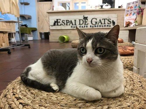 Una de las gatitas que vive de forma temporal en Espai de Gats hasta ser adoptada