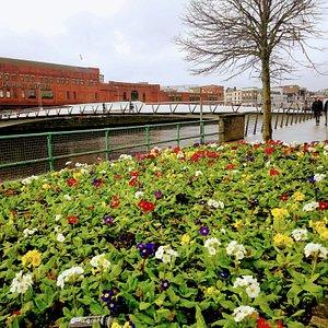 Spring 2020: Mary ELMES Bridge, Cork.